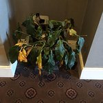 The plant that greets you when you arrive at the hotel. A tell sign of what you are in for.