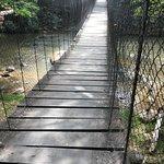 wooden walk bridge