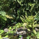 Foto de Oaks Lagoons