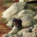 Mink on the shore