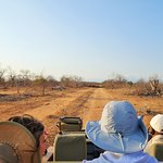 On safari in Balule Reserve