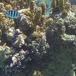 Reef Discovery Foto
