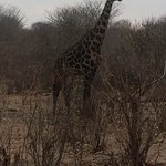 on one of our safaris on the grounds!