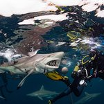 상어 다이빙