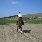 Horse exercise arena