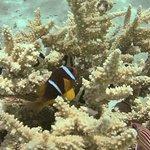 Snorkelling - Nemo