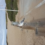 Best Western Beach Dunes Inn Foto