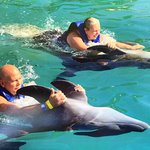 Fun with the dolphins