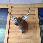Moose Head Grill