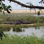 Foto de Elephant Coast Guest House