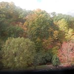 our view of fall trees