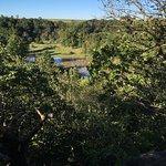 Root River Foto