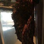 Photo de Ucluelet Aquarium