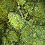Lots of star fish