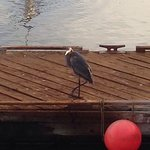A view from our room. crabs and bird on the docks at the dock directly across the street from th