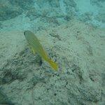 Foto de Hanauma Bay Nature Preserve