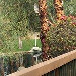 Hyatt Regency Indian Wells Resort & Spa Foto