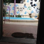Foto de Black Cat Hostel