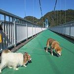 犬と吊り橋