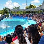 Presentación de delfines
