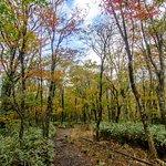 御里牧路線,攝於十月底  Eorimok trail, late-Oct
