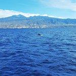 A friendly Pilot Whale