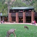 Zion Lodge deer