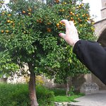 Even oranges on the trees at Christmas!