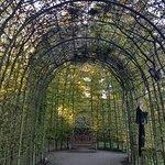 Foto di The Alnwick Garden