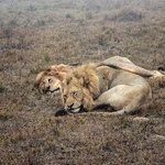 Schotia Safaris Private Game Reserve Foto