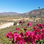 View of the beautiful vineyards among the best wineries in Ensenada