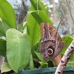 Tucson Botanical Gardens Foto