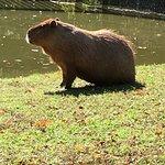 Foto de Cape May County Park & Zoo