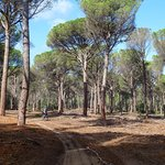 Baix Emporda cycle path on route to Monells