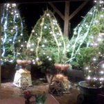 Christmas Tree Display Room