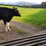 Henrietta guarding the fells gate