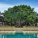 Courtyard Miami Coconut Grove Foto