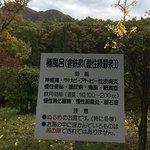 Photo de 1367843