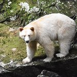 Photo de Spirit Bear Lodge