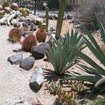 Cactus Coffee & Teagarden Foto