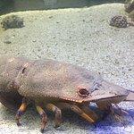 Aquario Paraiba Photo