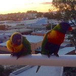 Visitors at sunset ❤️