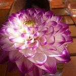Sur chaque table une fleur fraîche du jardin tout proche....