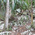 Mayan mounds outside of cabanas