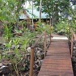 Path to Puma cabana
