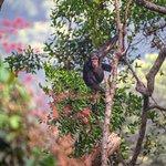 Tacugama Chimpanzee Sanctuary