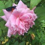 Mounts Botanical Garden Foto