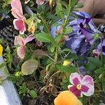 Nice planters
