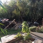 """Bring your own shampoo, conditioner & body soap.   """"garden"""" next to my room looked like this."""