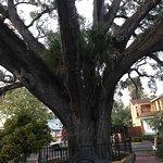 Howard Johnson Inn - Historic ST. Augustine FL Foto